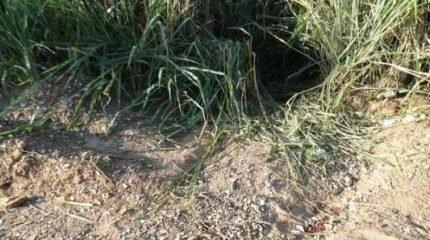 Os dois corpos foram encontrados nessa quinta-feira (7) e estavam escondidos em um matagal na Estrada Velha de Brotas
