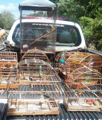 Polícia apreendeu aves que estavam em cativeiro sem a devida autorização do IBAMA (Instituto Brasileiro do Meio Ambiente e dos Recursos Naturais Renováveis)