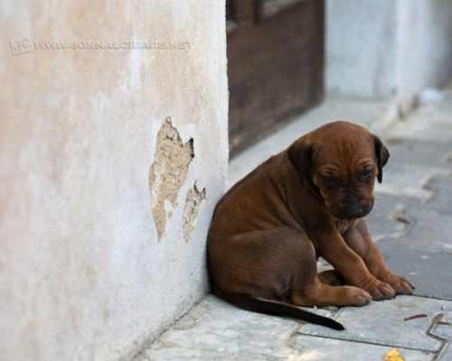 Especialista orienta proprietários quanto aos cuidados com os cães durante as festas de fim de ano