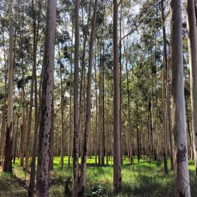 SP teria ordenado corte de árvores para suprir falta de recursos para pagamento da folha salarial