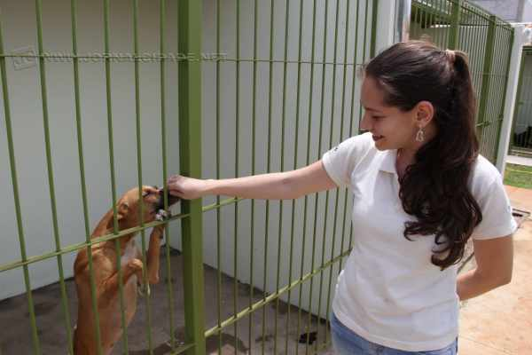 São 114 cachorros, entre adultos e filhotes, e outros 12 gatos disponíveis para adoção responsável no Canil Municipal