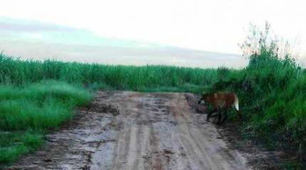 Animal caminhou tranquilamente pela área de trilha nos arredores do Horto