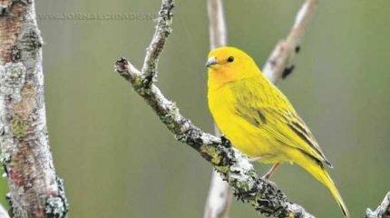 Segundo veterinário e membro da Diretoria Técnica, a Associação Rioclarense de Ornitólogos (ARO) existe há mais de 20 anos (Foto: ilustrativa)