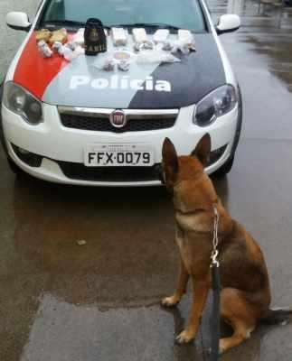 Polícia Militar localiza 5 kg de maconha em terreno no Jardim Novo II