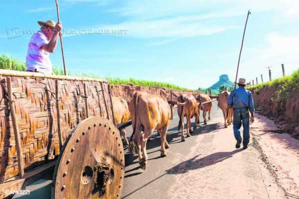 Carro de bois conduzido por Toninho Rozin e o ajudante João Francisco de Faria participa da Romaria de Cavaleiros carregando a imagem da Santa (foto: Renato Camozzi)