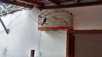 Diversas aves foram localizadas em uma residência na cidade de Rio Claro na tarde de quinta-feira