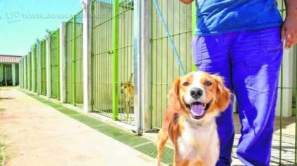 Atualmente canil municipal de Rio Claro têm 130 animais abrigados